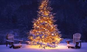 Panitia Perayaan Natal Oikumene Pemerintah Kabupaten Nias Akan Pilih 10 Pohon Natal Terbaik